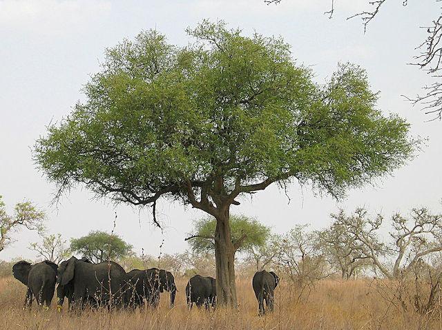 safari tour in cameroon