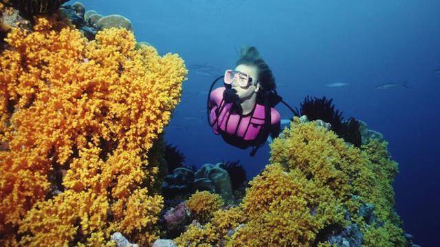scuba diving in cameroon