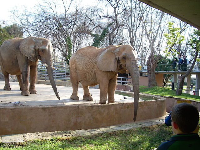 15 reasons dar es salaam is a perfect family vacation for Elephant barcellona