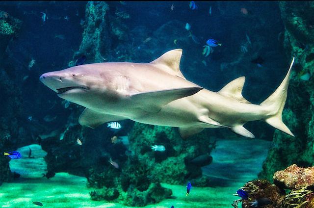 aquarium in swakopmund