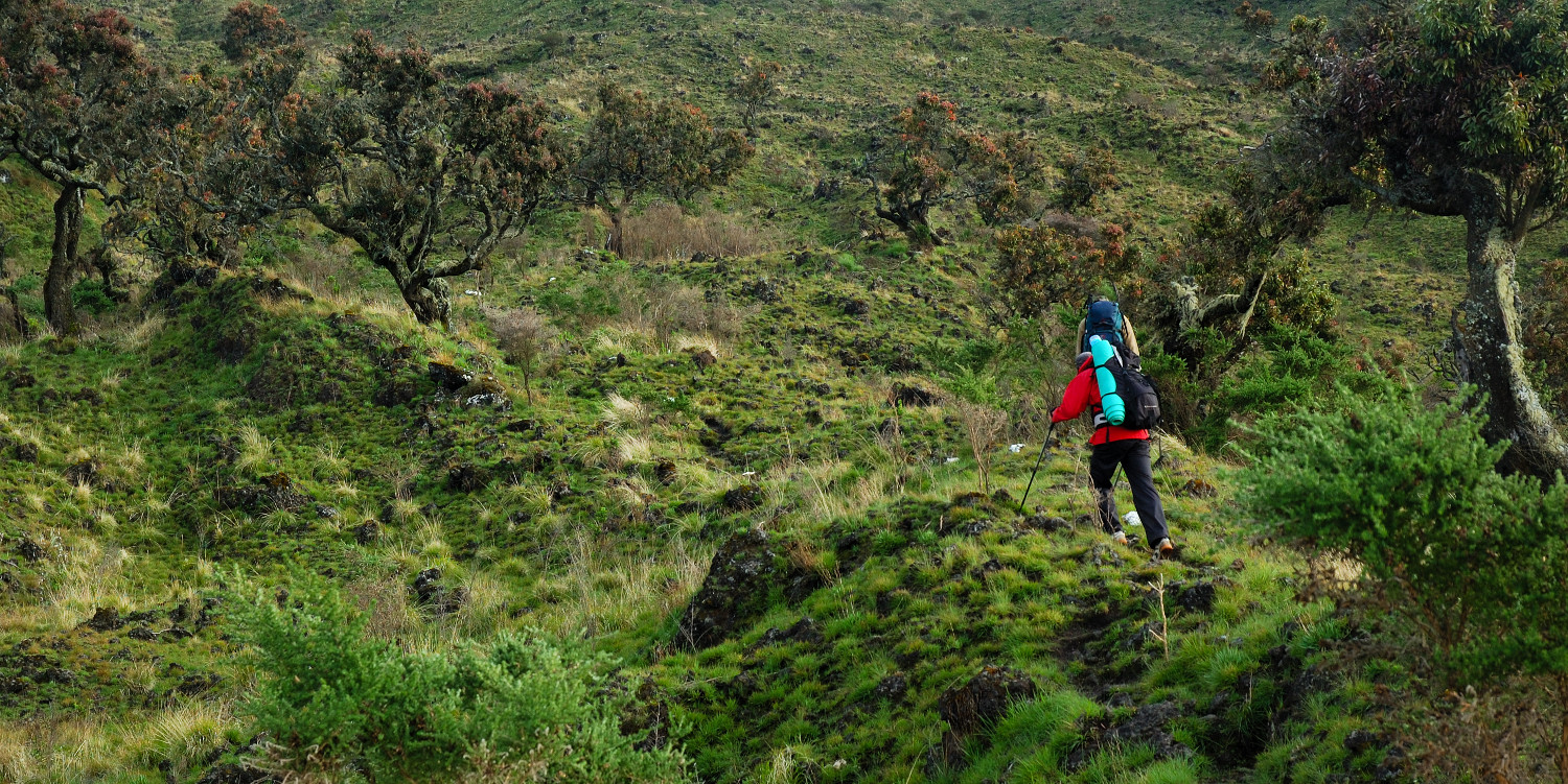 mount cameroon hiking