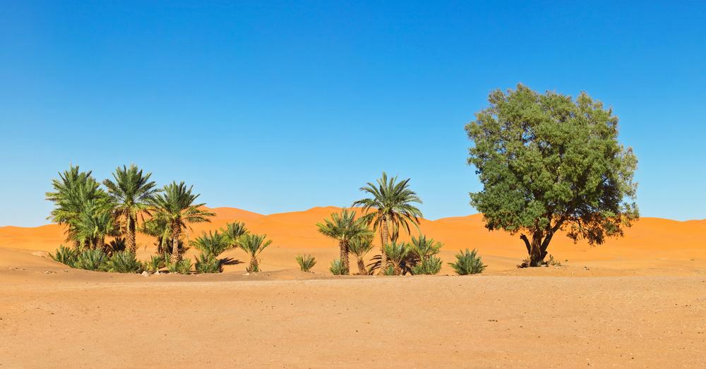 oasis dunes morocco