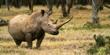 15 Things You Can Do To Help Stop Rhino Poaching