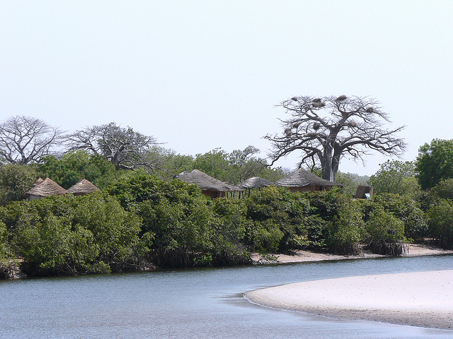 Winding river in Saloum