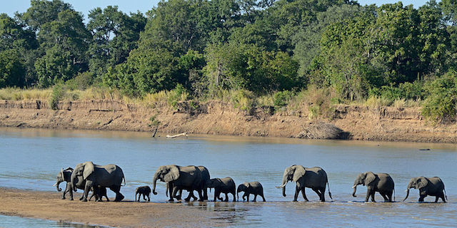 South_Luangwa_National_Park in zambia