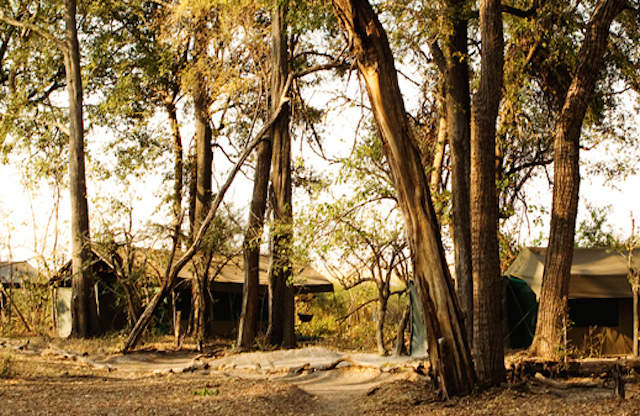 glamping at footsteps camp in botswana