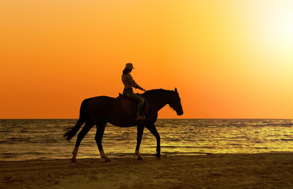 Go Horseback Riding In Western Cape