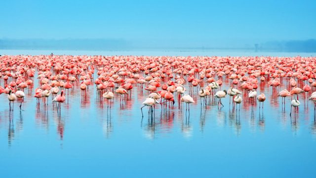 the best time to see flamingos at lake nakuru