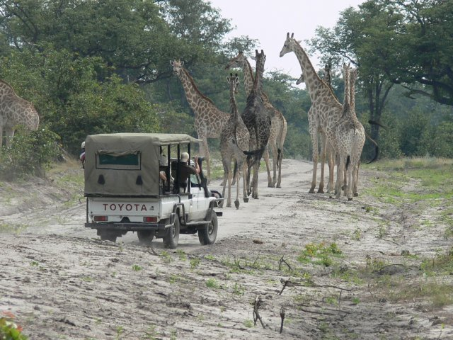 odirile safari in botswana