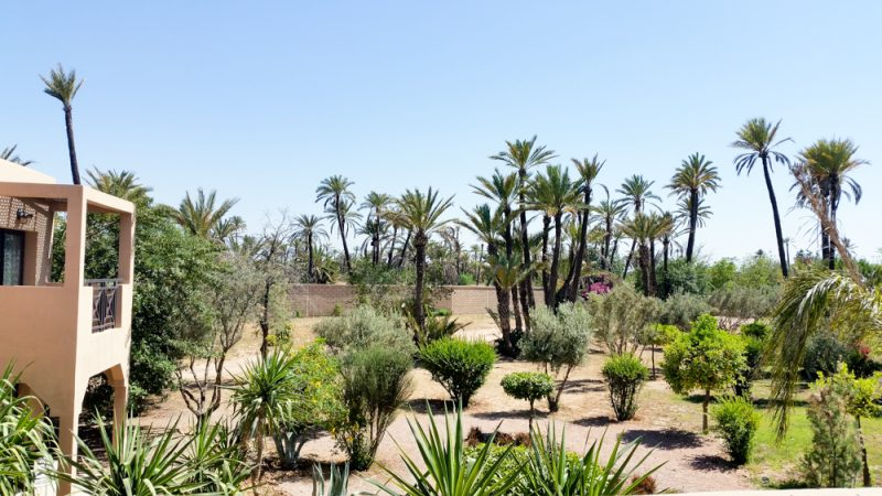 Pullman Marrakech Palmeraie Resort and Spa | Hotel Rates
