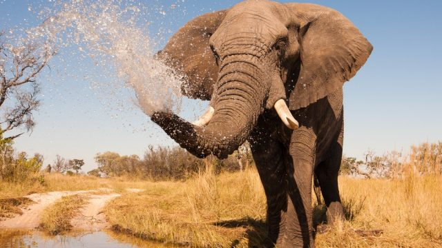 things to do in botswana for the whole family