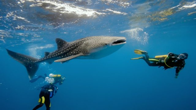 shark diving in mozambique