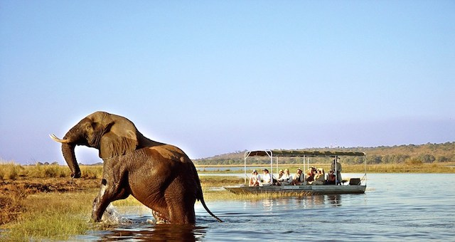 zambezi river cruise in zambia