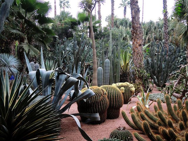 garden majorelle