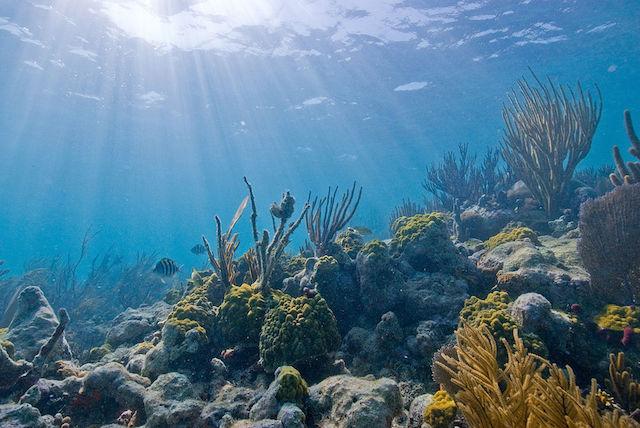 Algodoeiro cape verde scuba diving