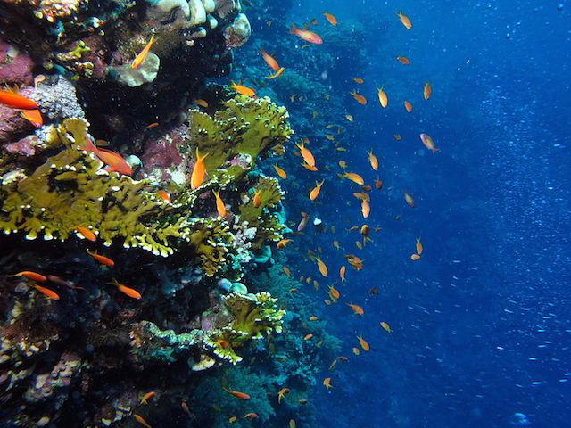 Champignon cape verde scuba diving