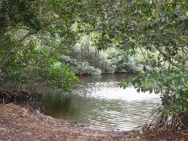 Mangrove Swamps in durban