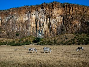 hells gate zebras
