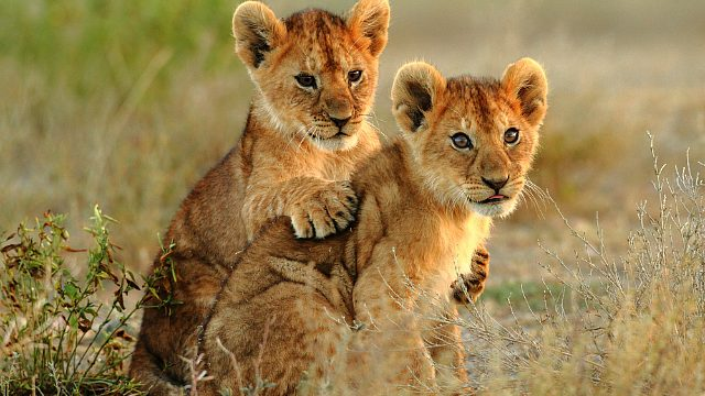 Awwwwww....Baby Animals In Botswana! | AFKTravel
