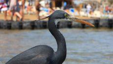 bird watching in egypt