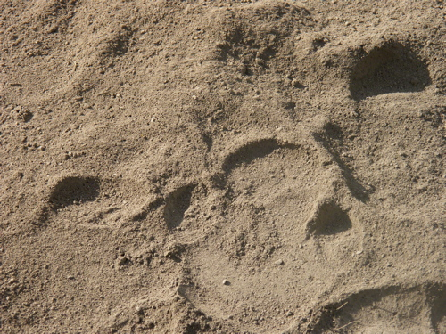 rhino tracks