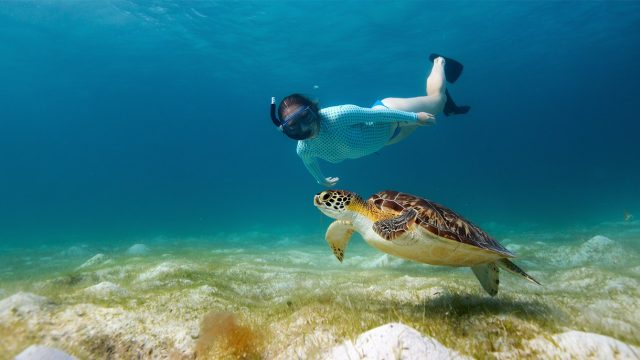 Travel Tip Where To Go Diving And Snorkeling In Zanzibar