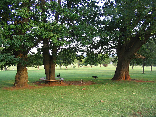 bezuidenhout park
