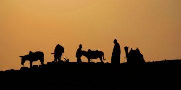 saqqara silhouette