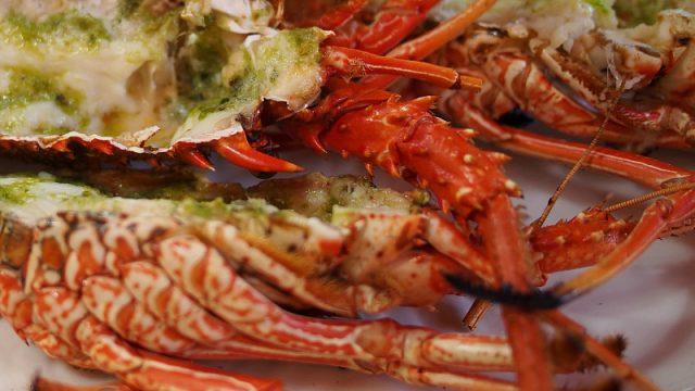 mauritius lobster