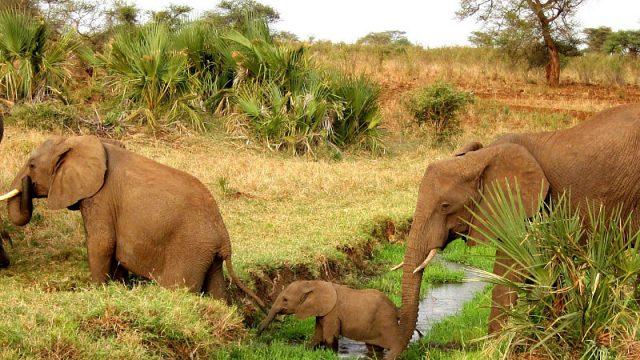 mara naboisho elephants