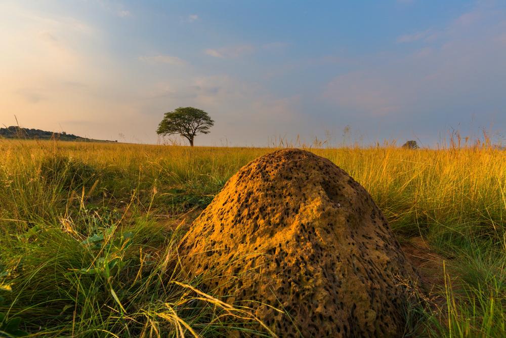 ant hill ghana