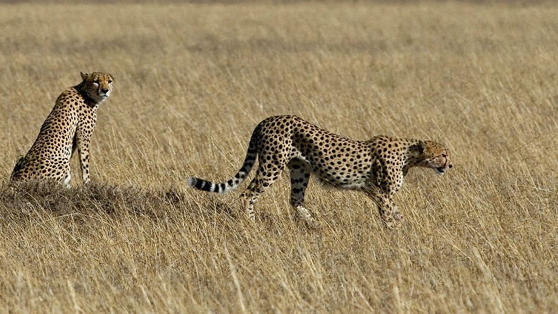 The Best Places To See Cheetahs In Africa