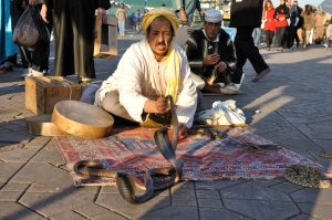 snake charmer djemaa
