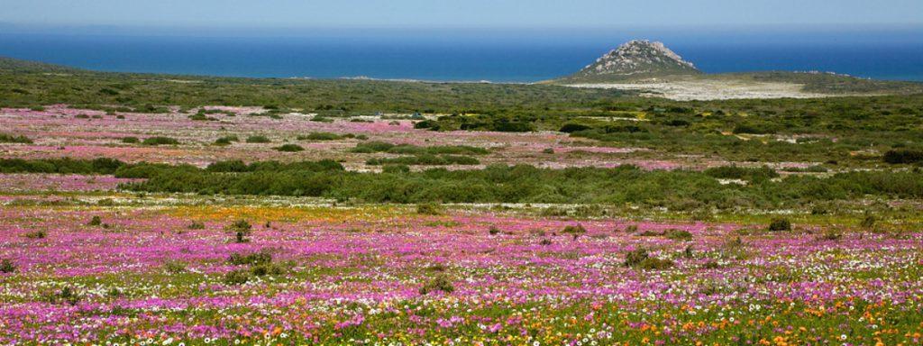 west coast wildflowers