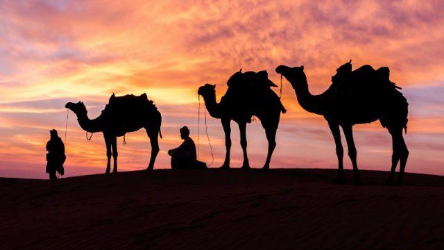 camel desert normal