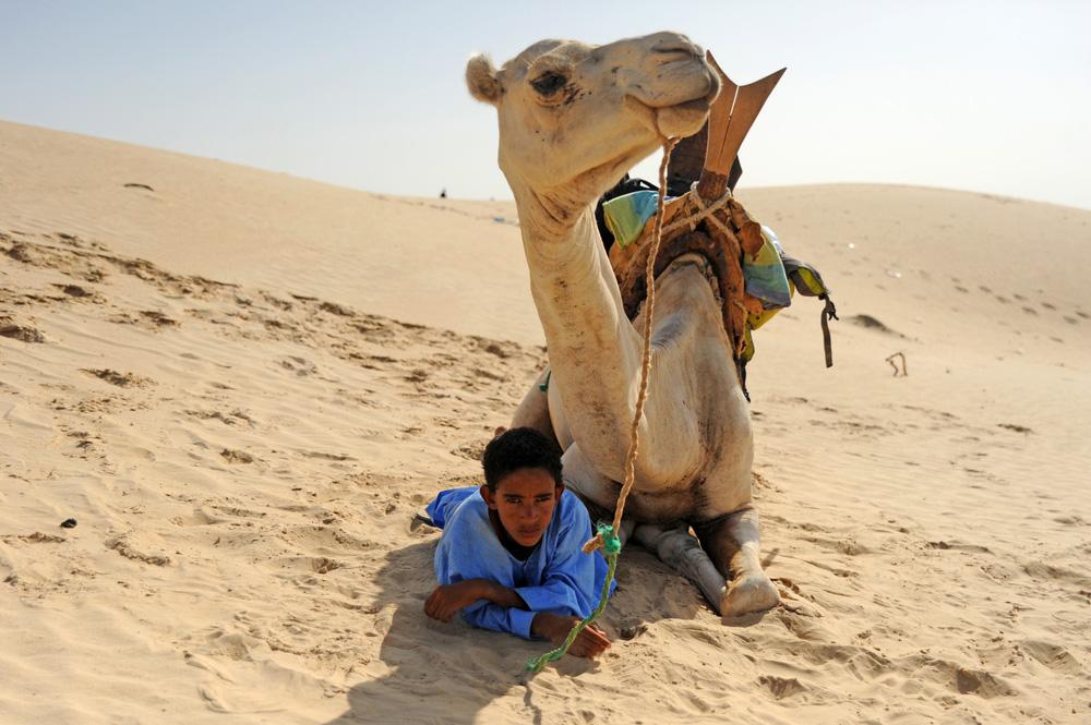 camel in timbuktu