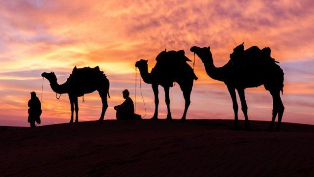 camels normal