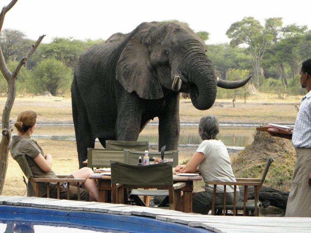 hide elephant