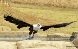 Falcons Ridge drakensberg
