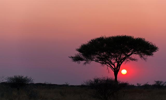 sunset acacia etosha