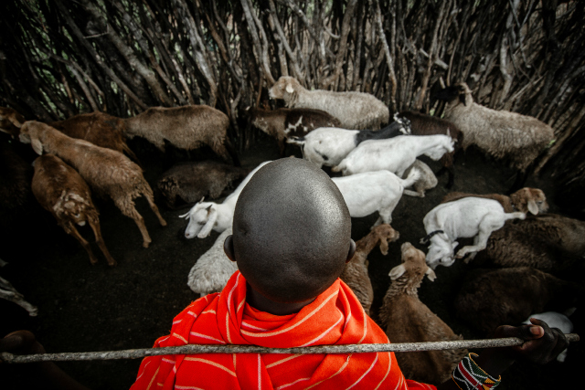 maasai essay Ben koissaba, doctoral student at clemson university and founder chair maa  civil society forum in kenya, comments in his essay on maasai.