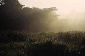 saiwa swamp