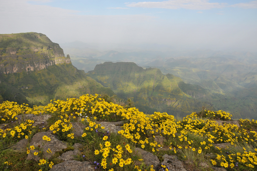 simien mountains flowers