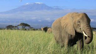 elephant kilimanjaro