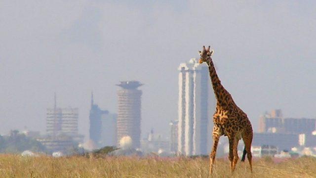 giraffe nairobi skyline