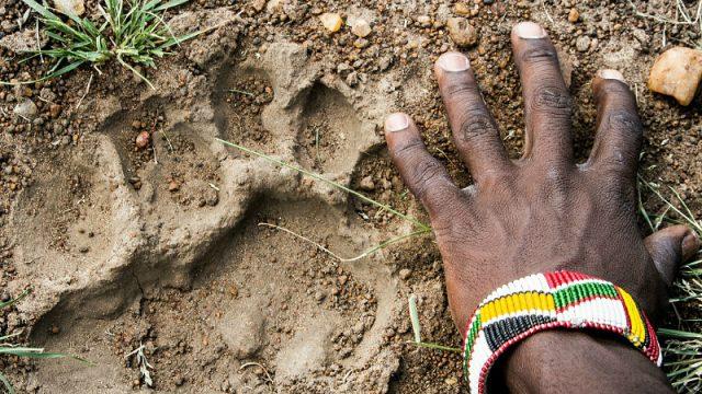 safari guide footprint normal
