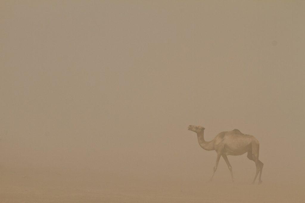 danakil sandstorm