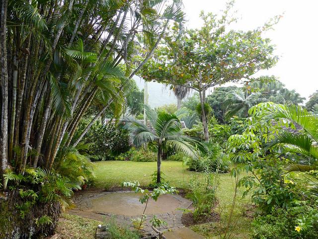 mauritius sugar