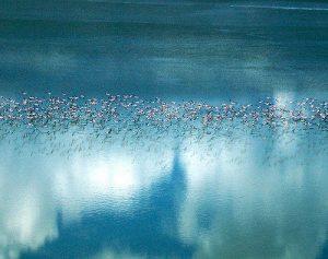 flamingo botswana