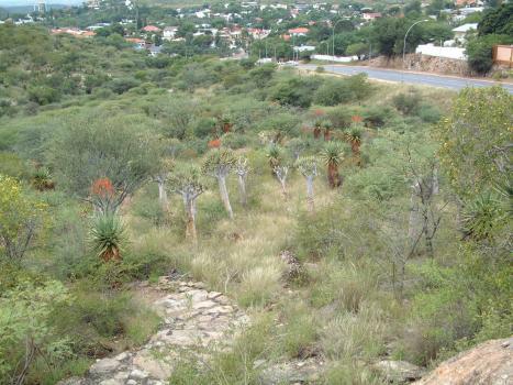 botanical garden namib